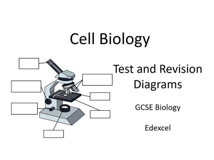 Diagrams Cell Biology Gcse  Edexcel