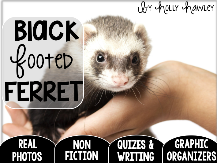 Black Footed Ferret-A Research Project-US Version