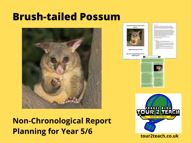 Non-chronological Report Planning: Year 5/6: Australian Animals: Brush-tailed Possum