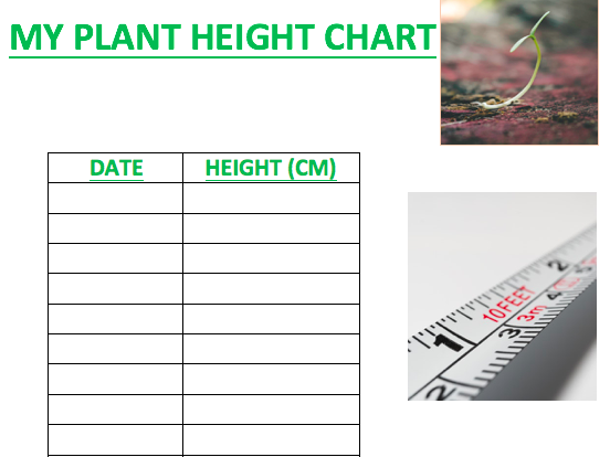 PLANT HEIGHT CHART / TABLE