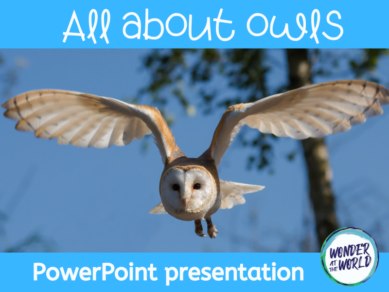 All about owls PowerPoint presentation KS2