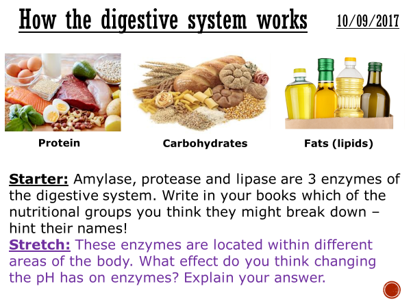How the digestive system works - complete lesson (KS4)