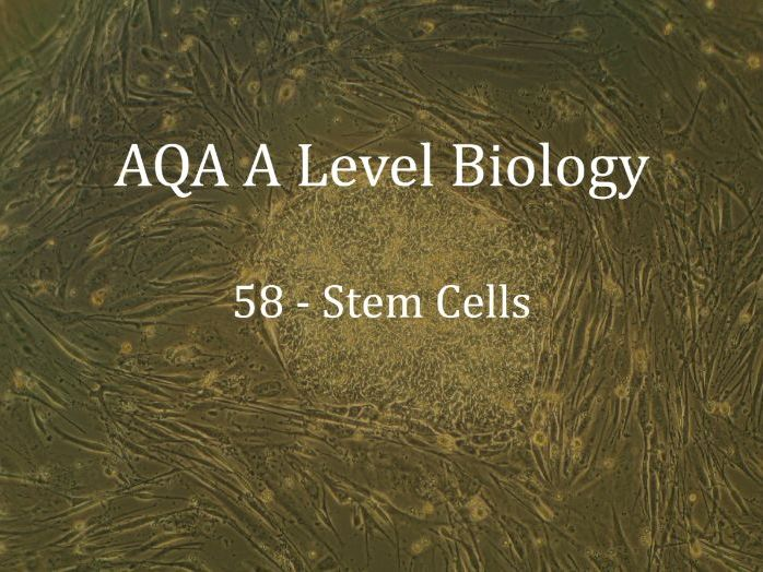 AQA A Level Biology Lecture 58 - Stem Cells