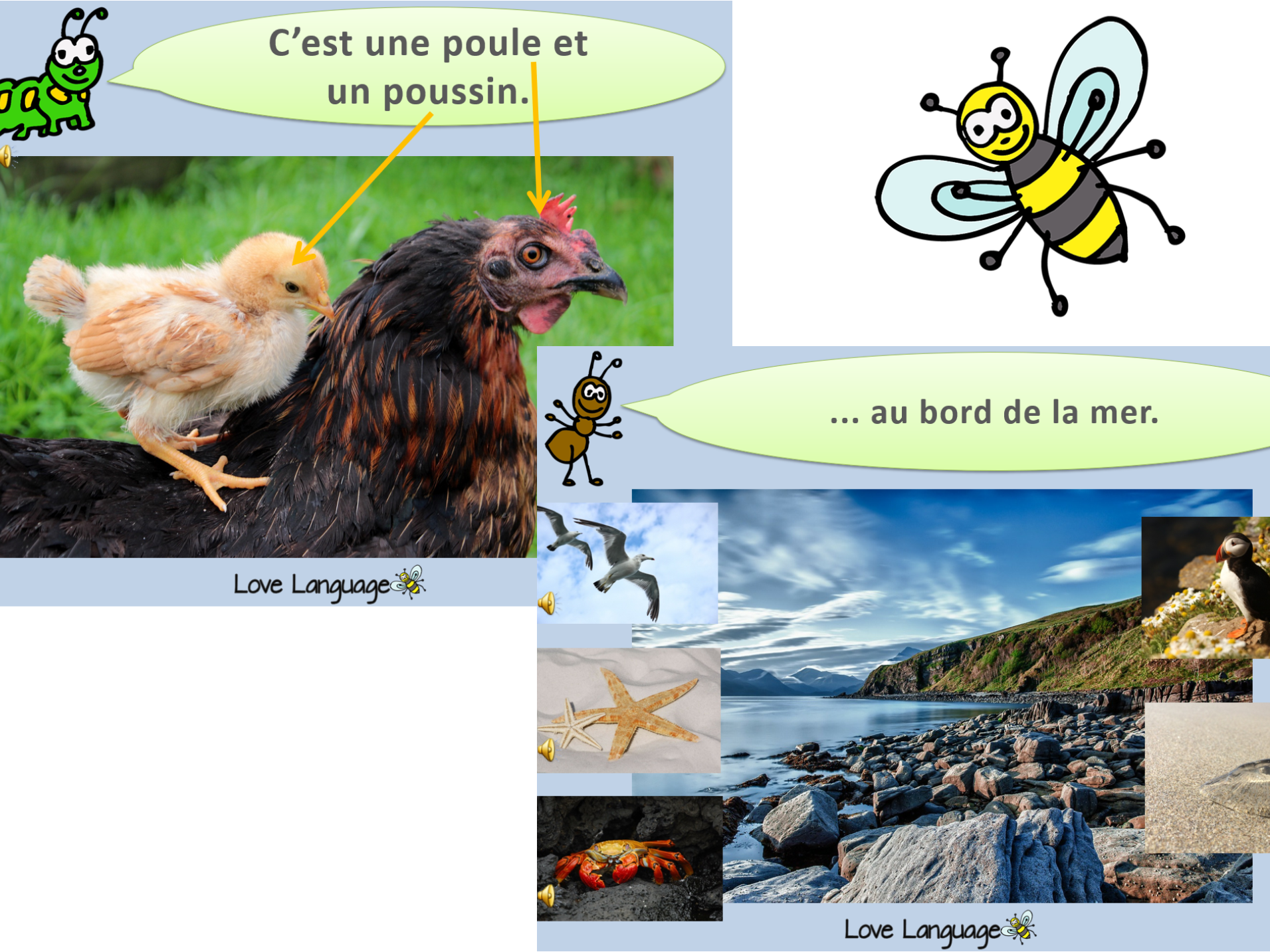 French Living Things - Habitats and Adult and Baby Animals Bundle