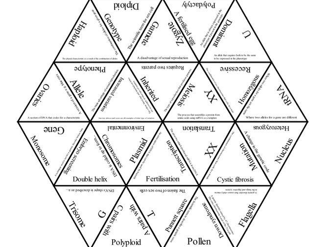 AQA Biology Paper 2 revision - Genetics Tarsia puzzle