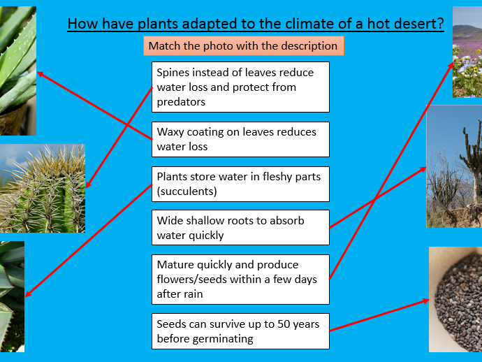 New AQA Introduction to hot deserts