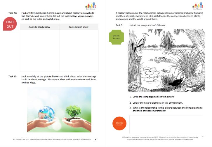 ECOLOGY & FOOD WEBS - science workbooklet