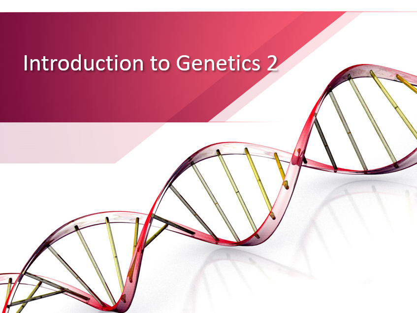 PowerPoint on simple Genetics introducing key terms