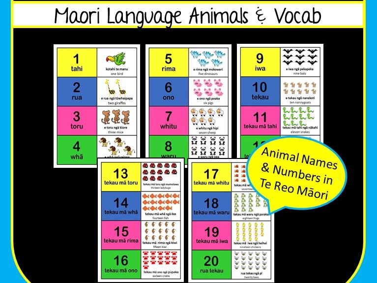 Maori Language Number Match Animals - Numbers 1-20 with Animal Names for Kids in Te Reo