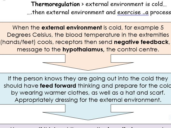Homeostasis thermoregulation body temperature, hypothermia and hypothermia