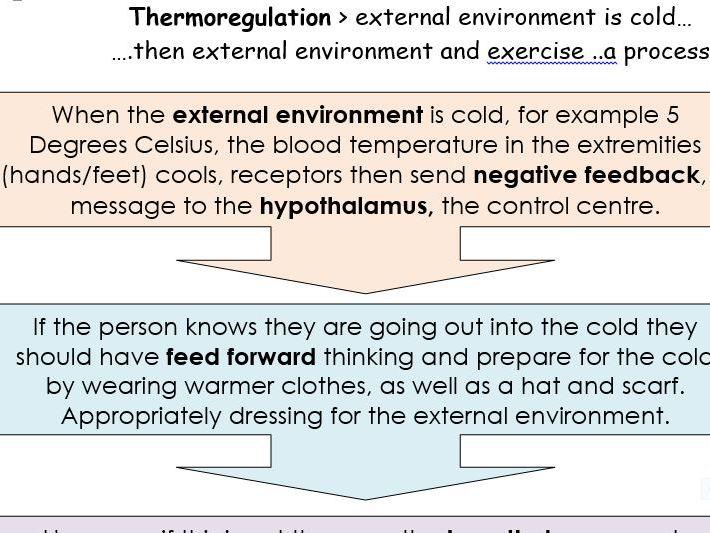 Homeostasis thermoregulation body temperature, hypothermia and hypothermia