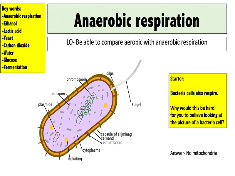 anaerobic respiration by mr science - teaching resources
