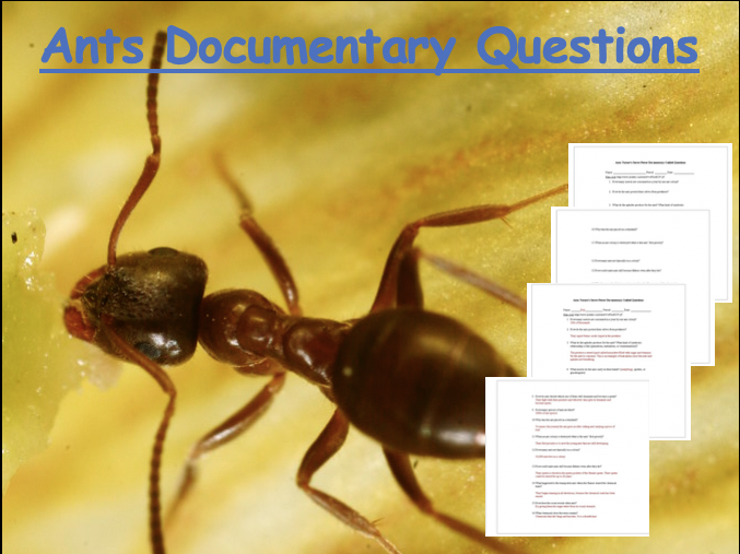 Ants Documentary and Questions