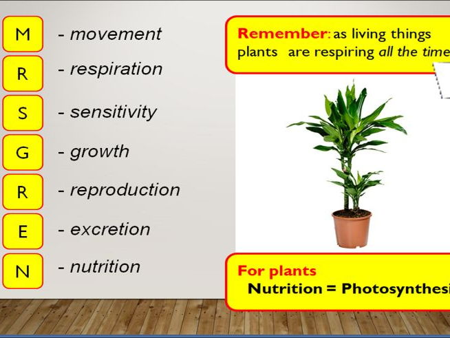 KS4 8.2 Rate of photosynthesis