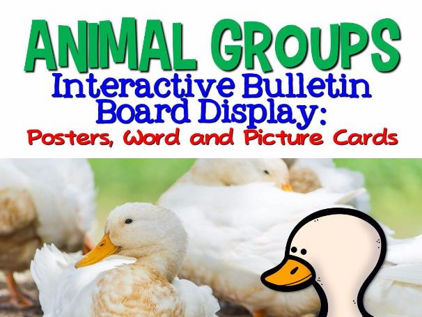 Animal Groups Interactive Bulletin Board Display