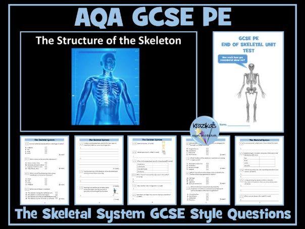 AQA GCSE PE The Skeletal System
