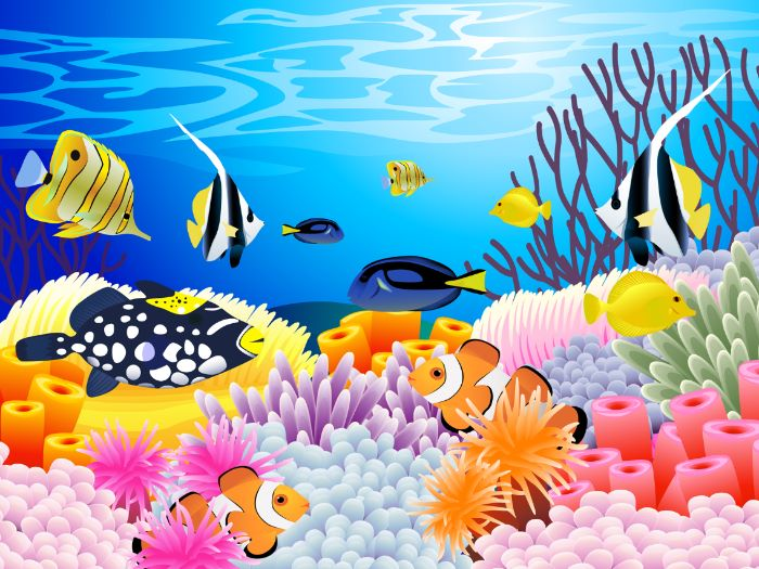 Coral Reef: Assessment