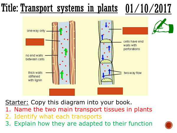 Transport systems in plants - complete lesson (GCSE 1-9)