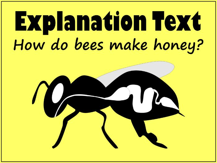 Explanation Text Example: How Do Bees Make Honey with Feature Sheet & Answers