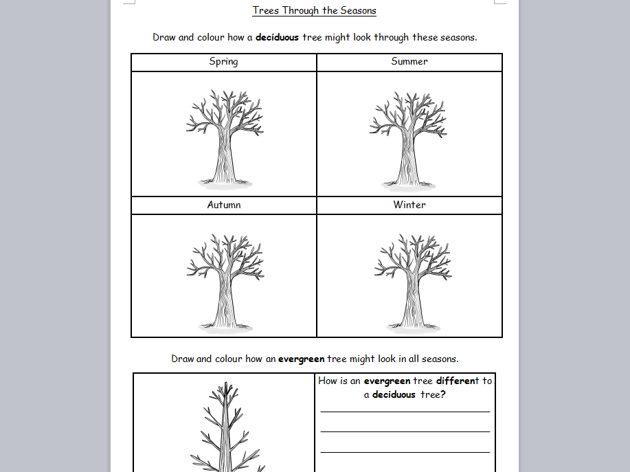 KS1 Science Deciduous and Evergreen Trees Through Seasons Worksheet