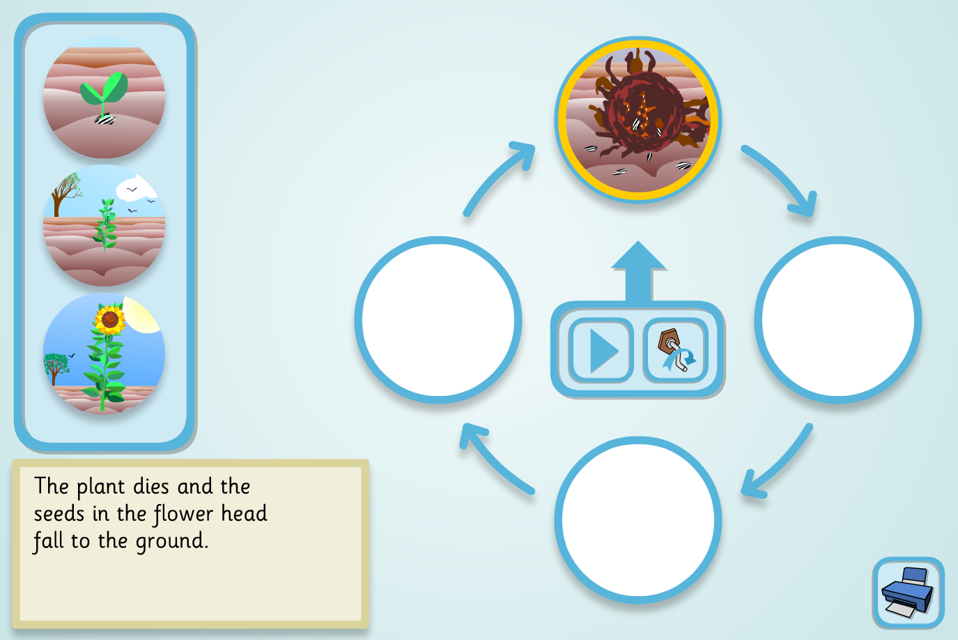 Sunflower Lifecycle Sequencer (Simple) - KS2 Literacy