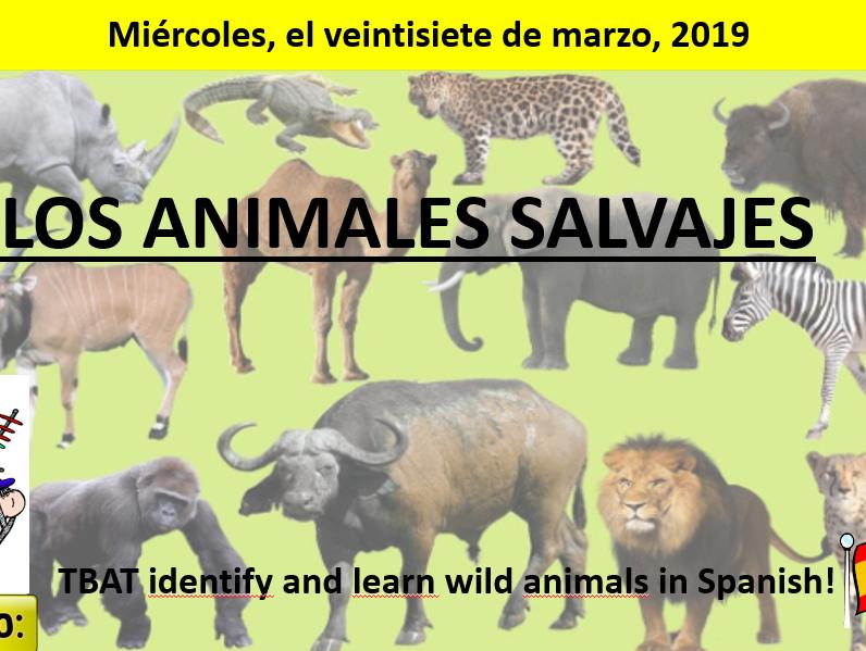 Los animales salvajes - wild animals - Y7