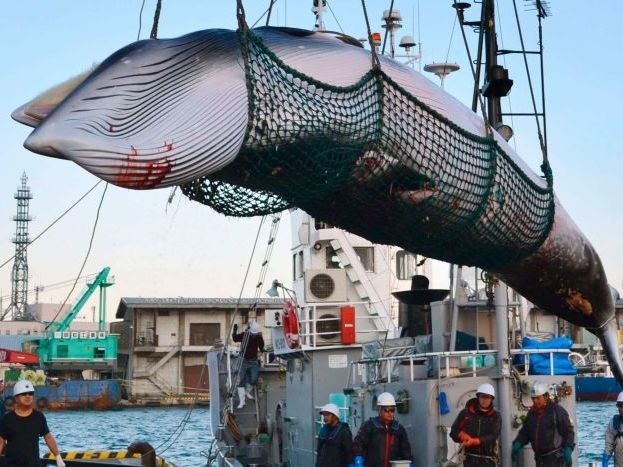 Fishing & Whaling