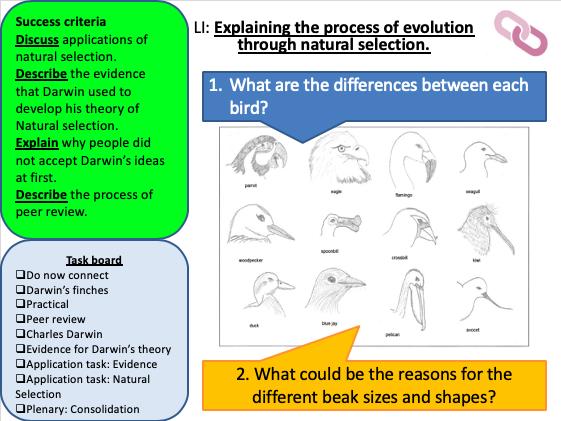 KS3 Evolution (AQA Activate)