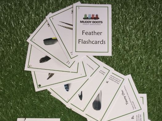 Feather Flashcards