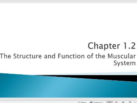 OCR 9-1 GCSE PE Section 1.2 Muscles