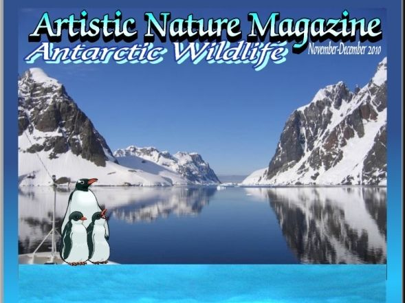 """Antarctic Wildlife"" Art & Nature-Science Unit"