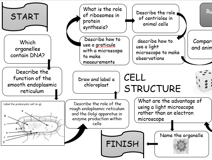 A Level  Biology Boardgame - Cell Structure