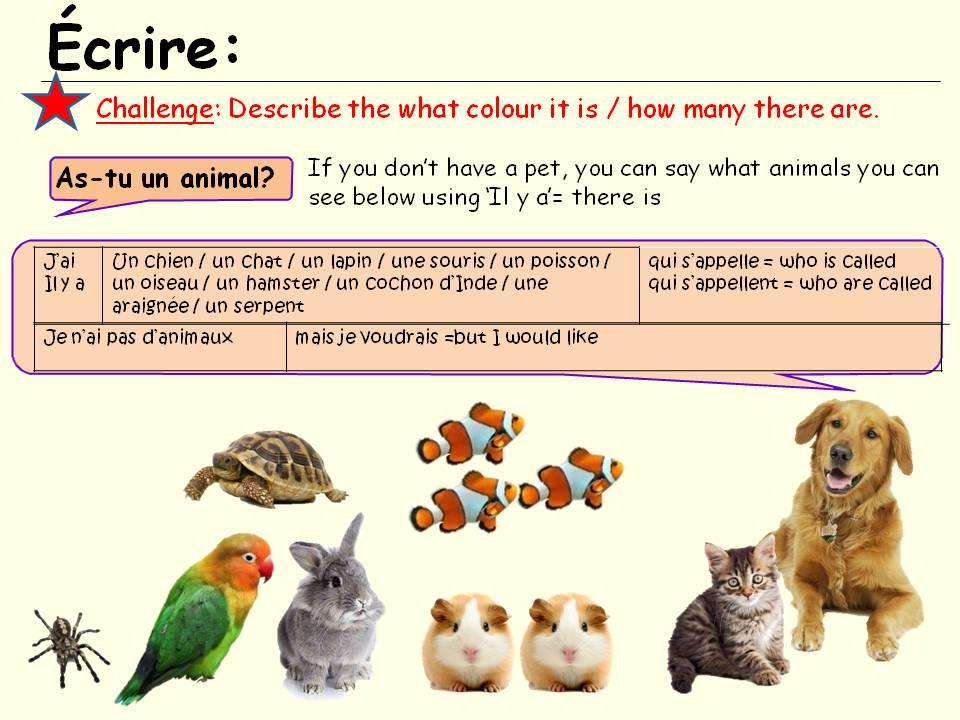 Tu as un animal?  pets y7 French