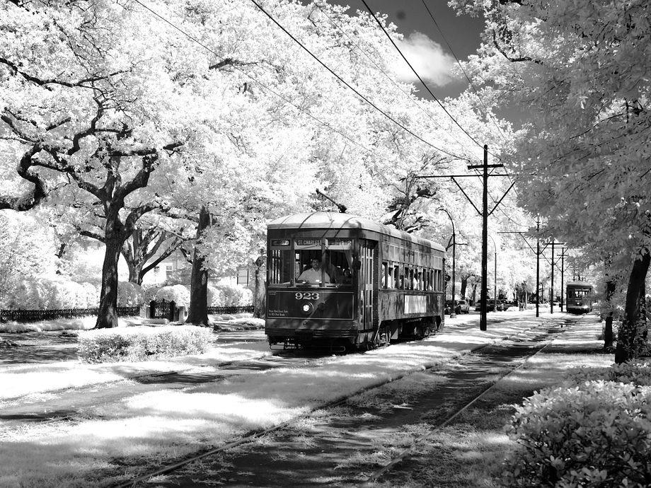 A Streetcar Named Desire - essay questions