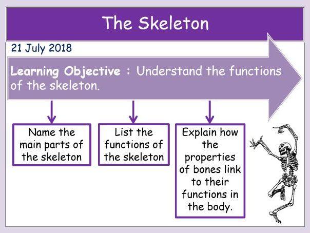 The Skeleton (KS3 organisms)
