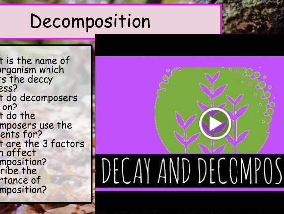 Decomposers GCSE