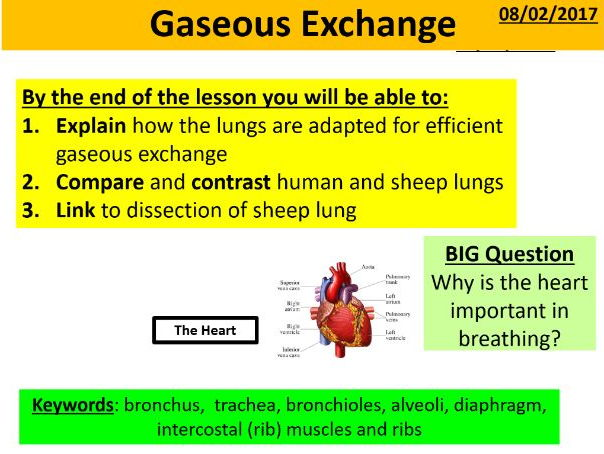 Gaseous Exchange
