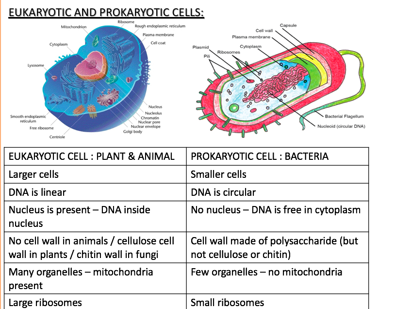 EDEXCEL AS/A-Level Biology UK - Topic 3 The Voice of the Genome