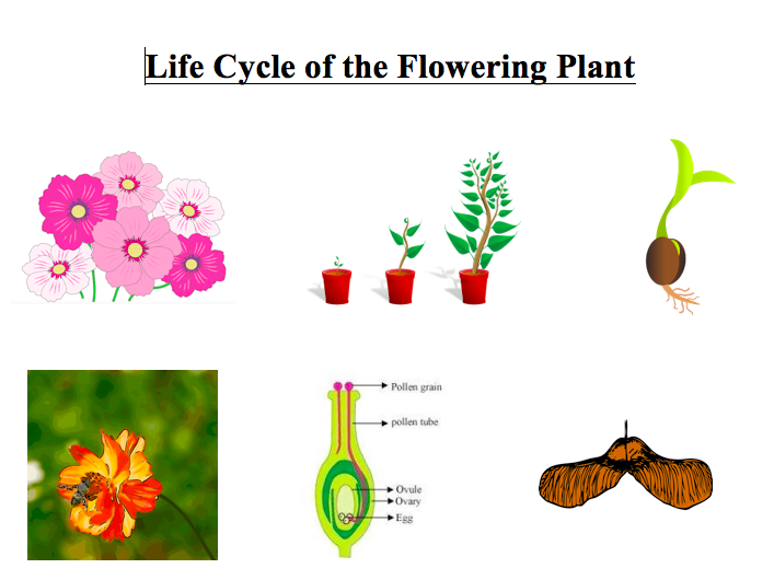 Flowering plant resources