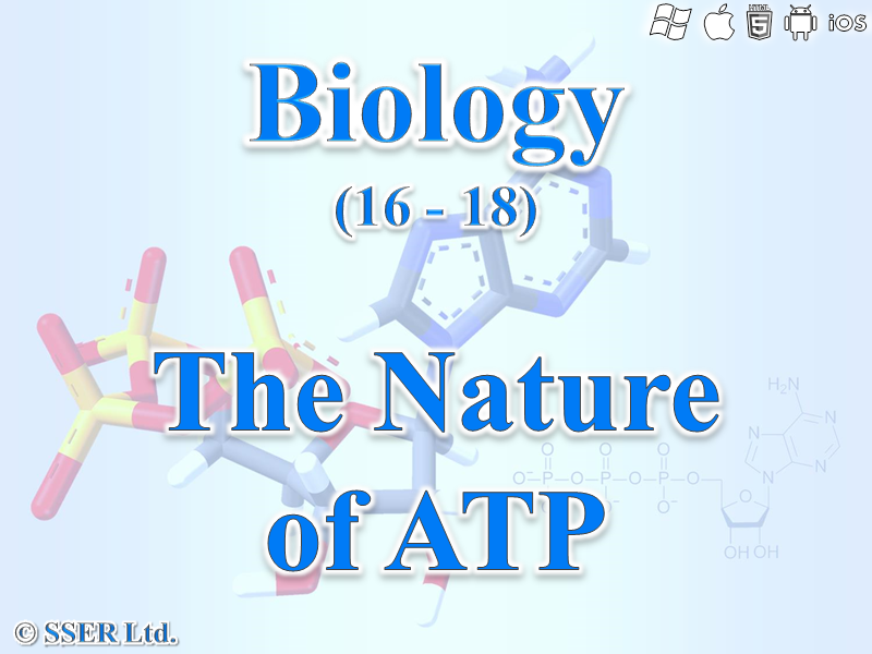 3.1.6 The Nature of ATP