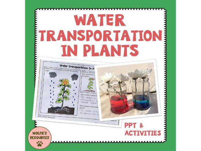 Water Transportation In Plants