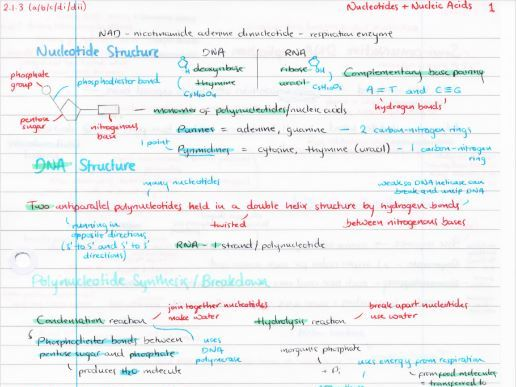 OCR A Level Biology Nucleic Acids Revision Poster