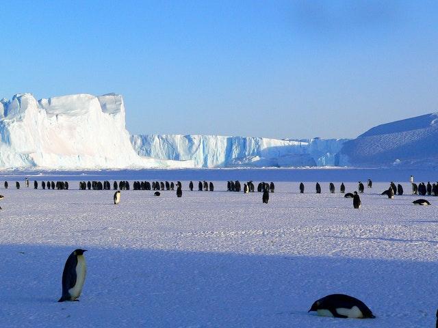 Arctic and Antarctic - Map comparison worksheet