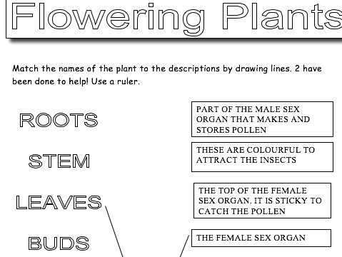 Flowering Plants - Key Words