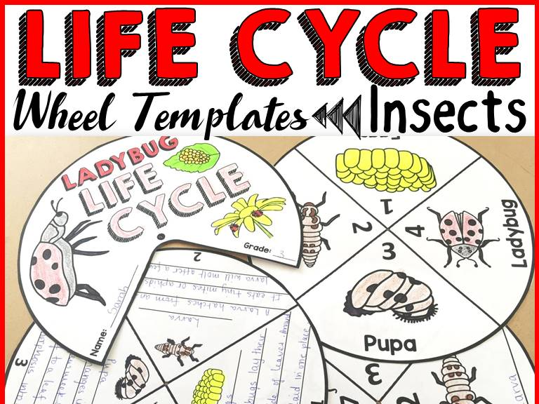 LIFE CYCLE WHEELS: INSECTS