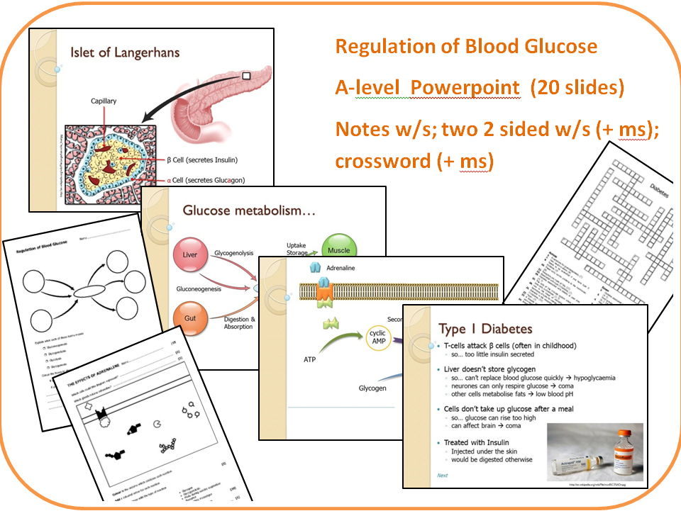 Regulation of blood glucose (A-level).  20 slide powerpoint, notes, two worksheets and a crossword