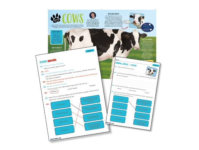 P4 Science Reading: Cows