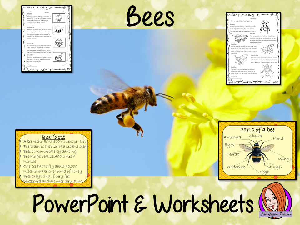 Bees   -  PowerPoint and Worksheets