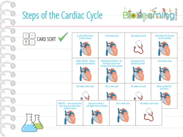 Steps of the Cardiac Cycle - Card Sort (KS5)
