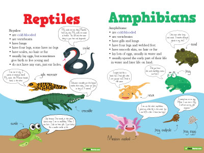 Fishes Amphibians and Reptiles Science Worksheets and